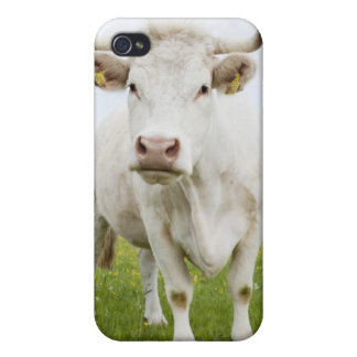 Cow standing in grassy field cover for iPhone 4