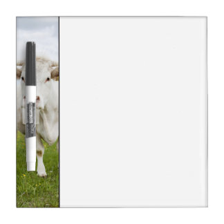 Cow standing in grassy field dry erase board