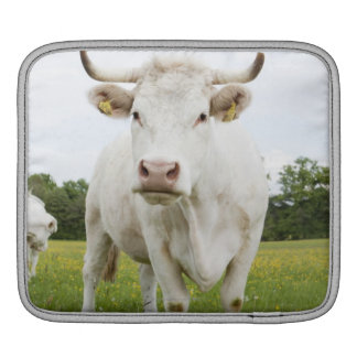 Cow standing in grassy field iPad sleeve