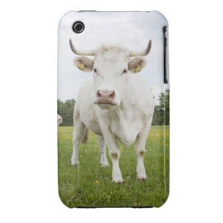 Cow standing in grassy field iPhone 3 covers