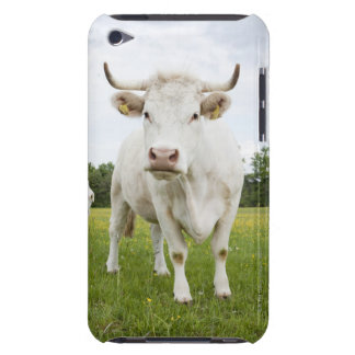Cow standing in grassy field iPod Case-Mate case