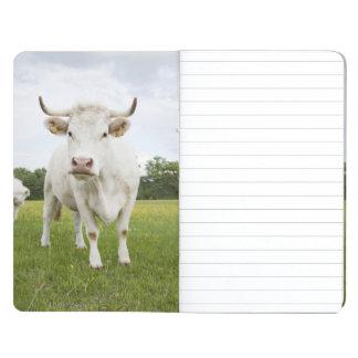 Cow standing in grassy field journal