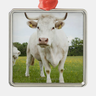 Cow standing in grassy field Silver-Colored square decoration