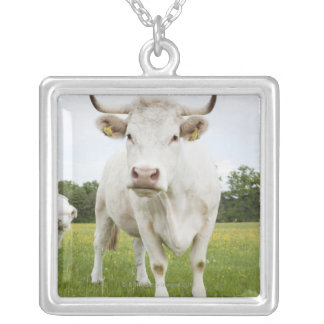 Cow standing in grassy field silver plated necklace