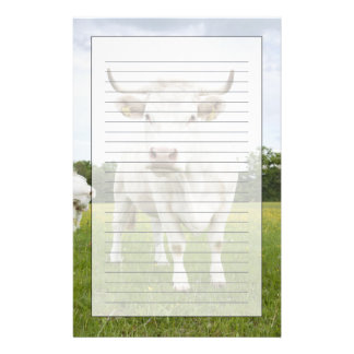 Cow standing in grassy field stationery