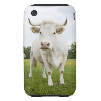 Cow standing in grassy field tough iPhone 3 cover