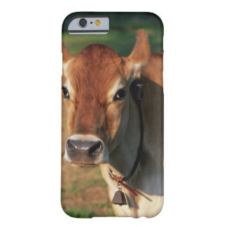 Cow Wearing a Cowbell Barely There iPhone 6 Case