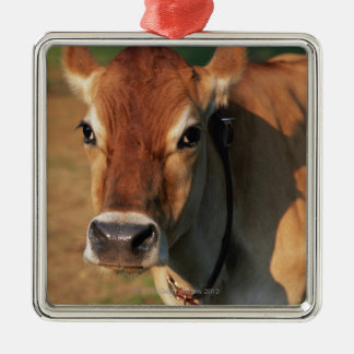 Cow Wearing a Cowbell Christmas Ornament