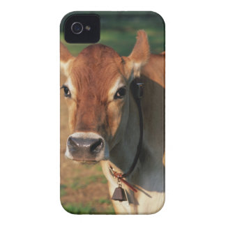 Cow Wearing a Cowbell iPhone 4 Covers