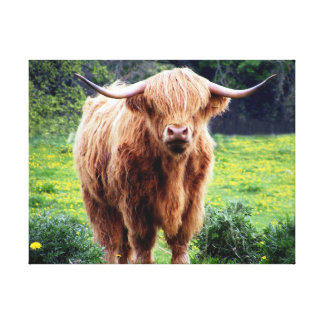 Cow with big horns beautiful nature scenery canvas print