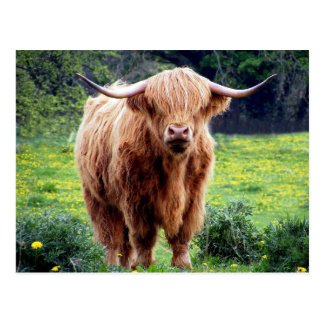 Cow with big horns beautiful nature scenery postcard