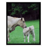 Cow with her calf poster
