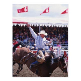 Cowboy at a Rodeo Postcard