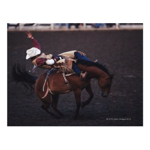 Cowboy in a Rodeo 2 Post Cards