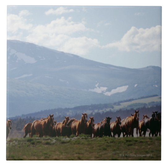 Cowboy moving herd of horses large square tile