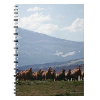 Cowboy moving herd of horses notebook