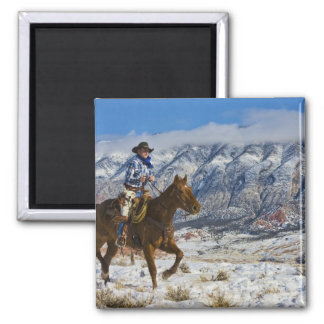 Cowboy on Horse wearing Leather Chaps 2 Square Magnet