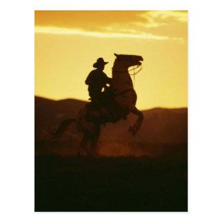 Cowboy on Rearing Horse Postcard