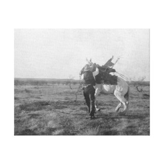 "Cowboy ""Red Saunders"" Saddles a Bronco Canvas Print"