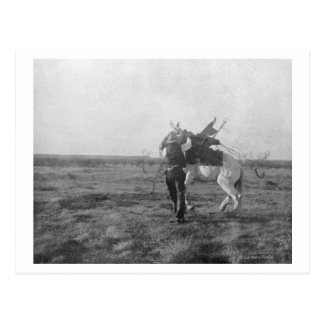 Cowboy Red Saunders Saddles a Bronco Post Cards