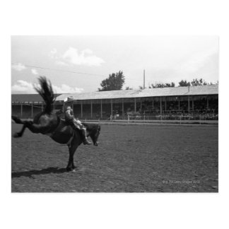 Cowboy riding horse in rodeo, (B&W) Postcard