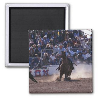Cowboy Roping Calf at Rodeo Magnets