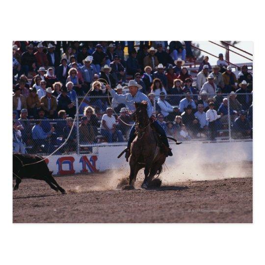 Cowboy Roping Calf at Rodeo Postcard