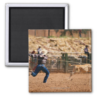 Cowboy roping calf in rodeo square magnet