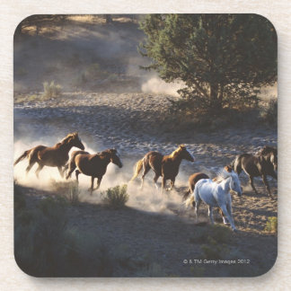 Cowboy with herd of horses drink coasters