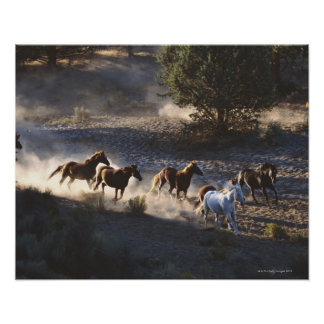 Cowboy with herd of horses print