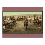 Cowboys and Cows Post Card