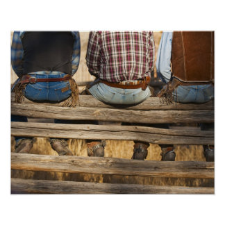 Cowboys sitting on fence poster