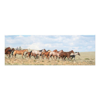 Cowgirl Gathering Horses Photo