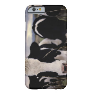 Cows 3 barely there iPhone 6 case