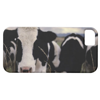 Cows 3 iPhone 5 cover