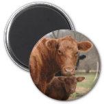 cows 6 cm round magnet