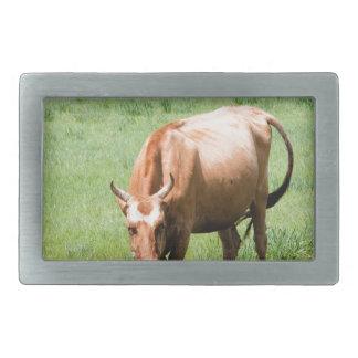 cows and bulls belt buckles