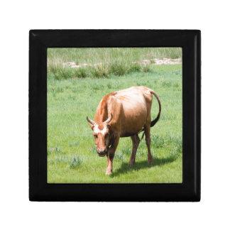 cows and bulls gift box