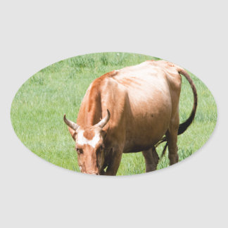 cows and bulls oval sticker