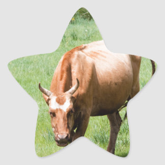 cows and bulls star sticker