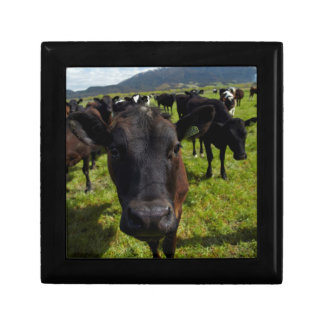 Cows and Mt Somers Gift Box