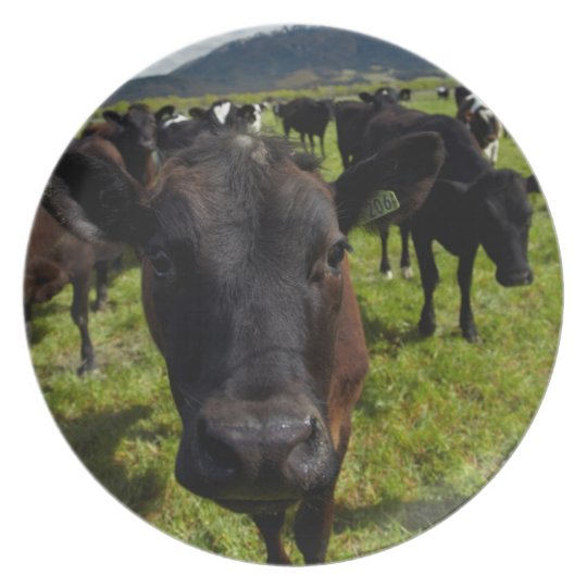 Cows and Mt Somers Plate