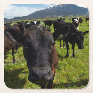 Cows and Mt Somers Square Paper Coaster