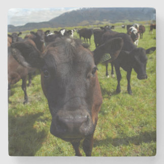 Cows and Mt Somers Stone Coaster