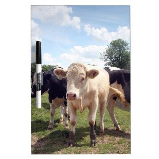Cows at Dedham Dry-Erase Board