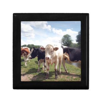 Cows at Dedham Gift Box