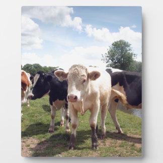 Cows at Dedham Plaque