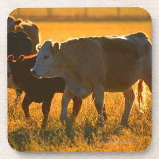 Cows at pasture 2 beverage coaster