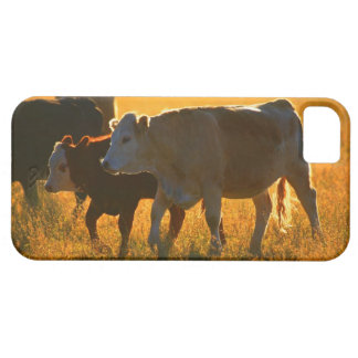 Cows at pasture 2 iPhone 5 cover