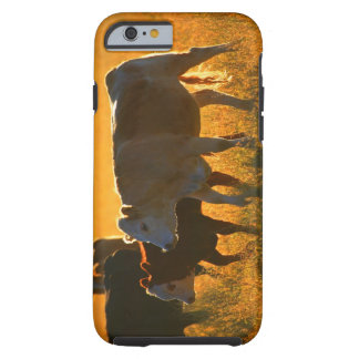 Cows at pasture 2 tough iPhone 6 case